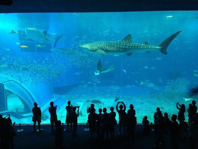 žraloci v akváriu