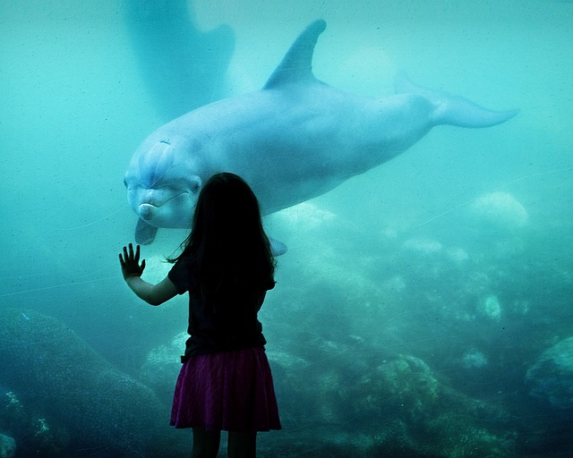 delfín s holčičkou