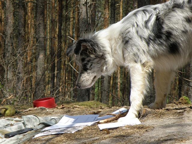 pes bezdomovec