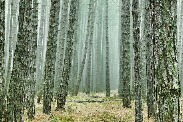 stromy v lese - kmeny