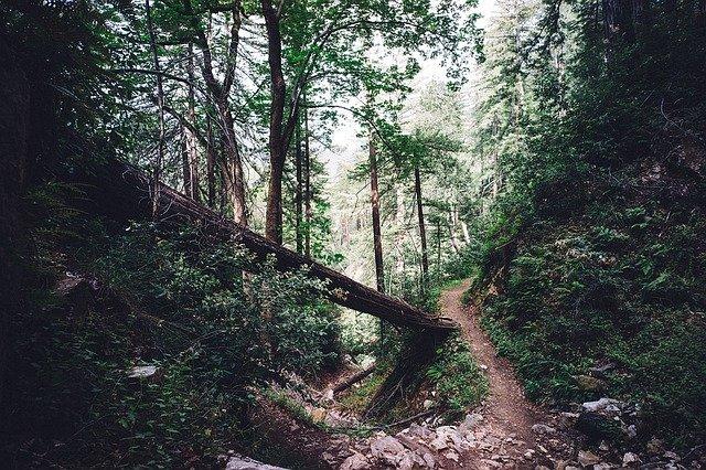 Zalesněná stezka
